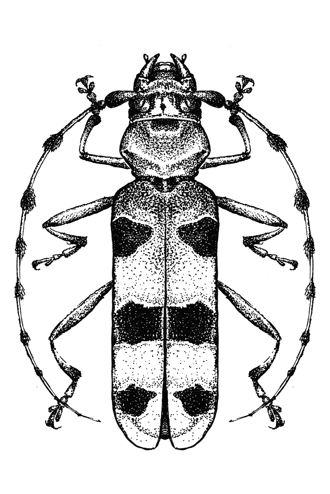dotwork-insects-beetle-1