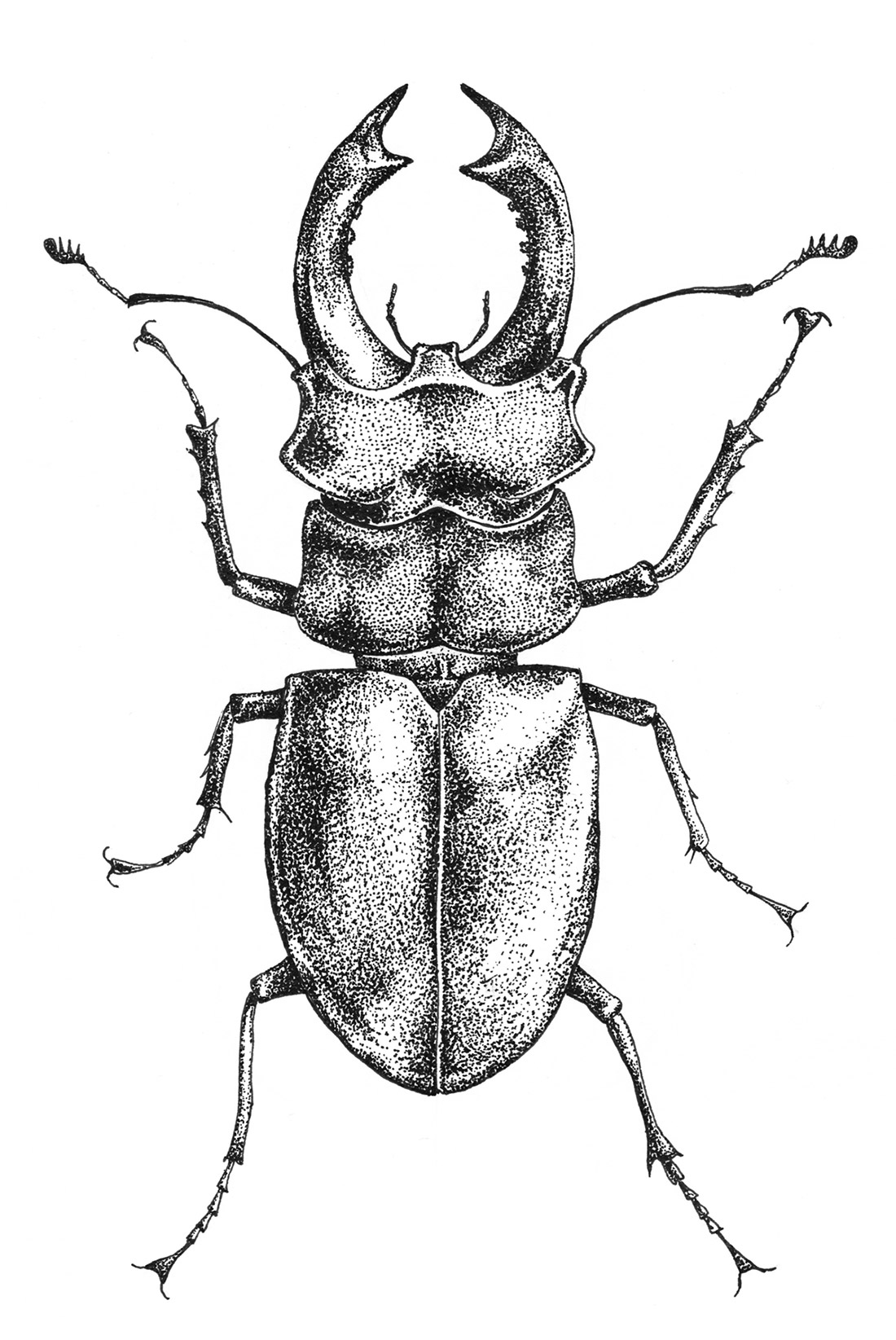 dotwork-insects-beetle-2