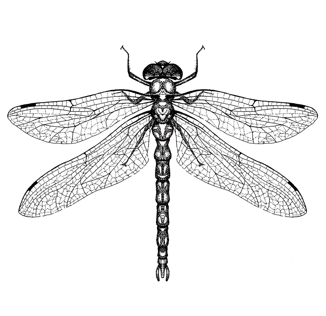 dotwork-insects-dragonfly