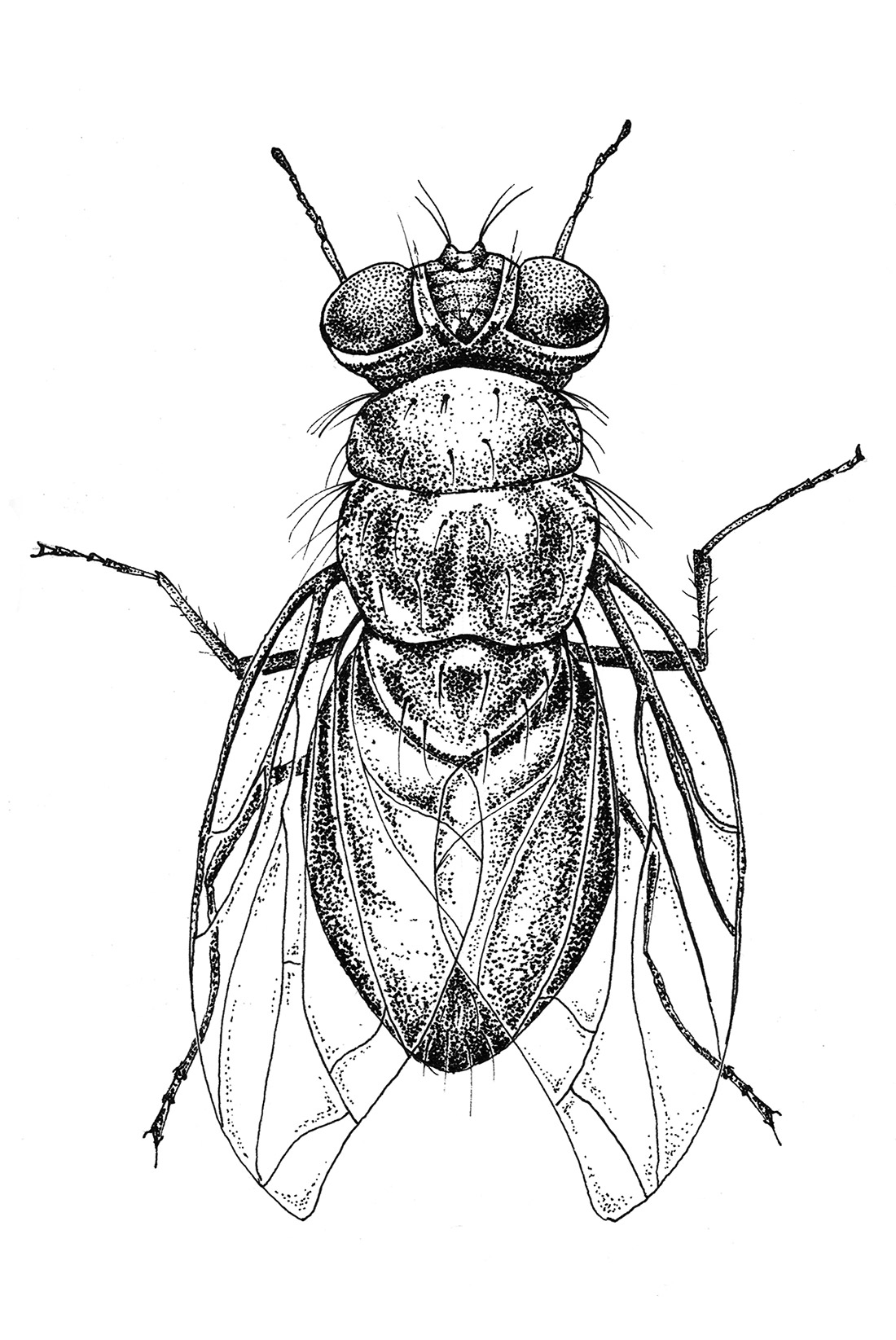 dotwork-insects-fly