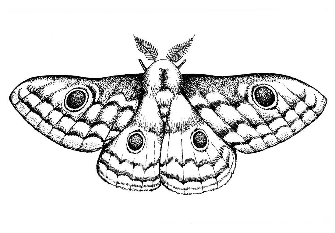 dotwork-insects-moth