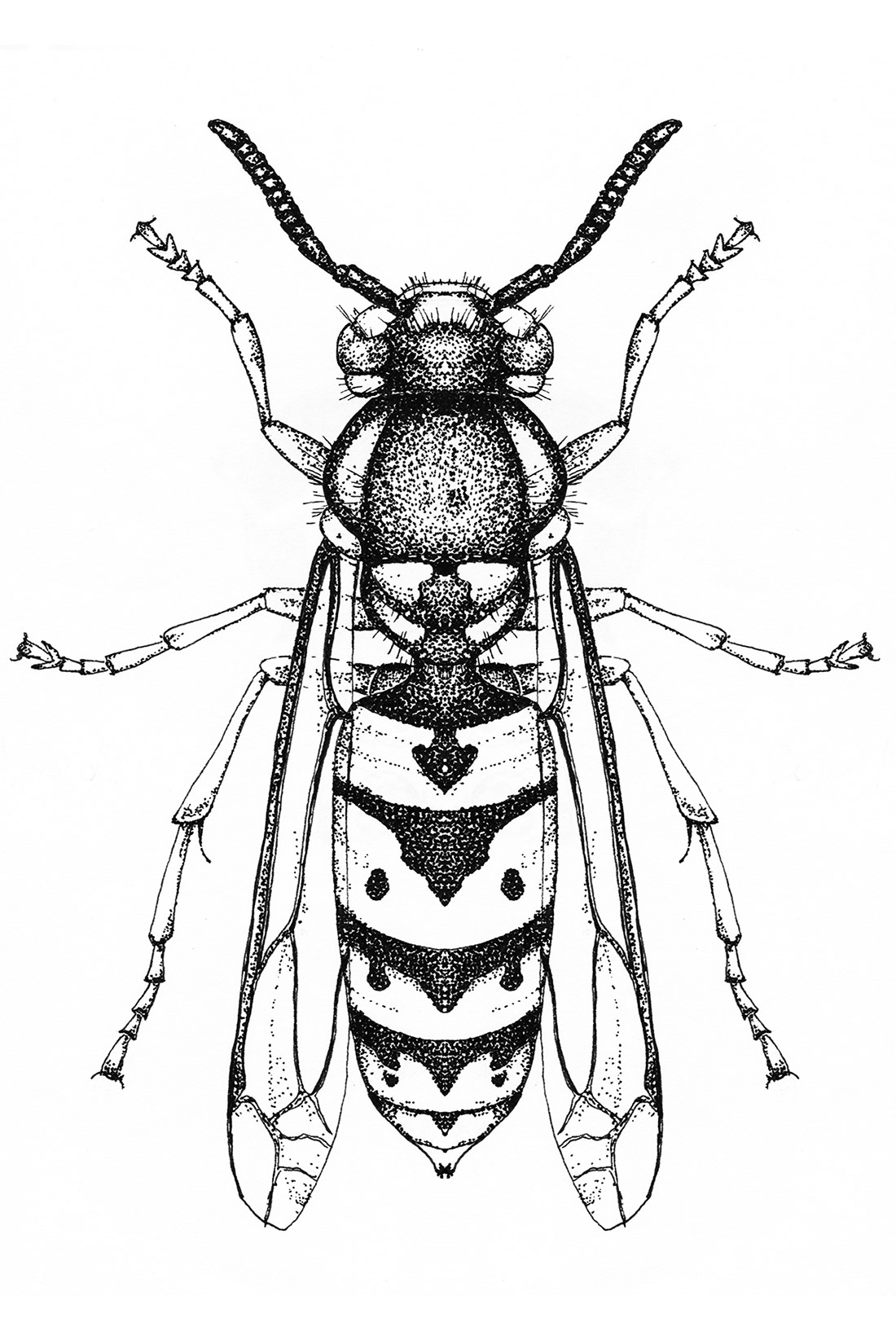 dotwork-insects-wasp