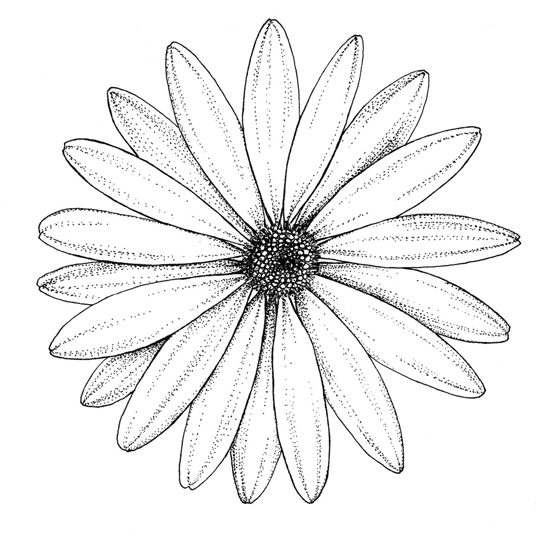 dotwork-flowers-and-leaves-daisy