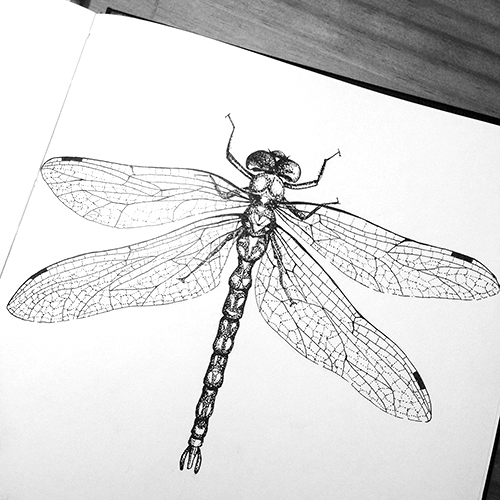 insects_dragonfly-square