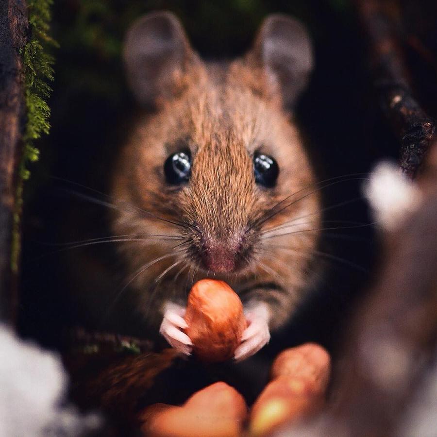 konsta-punkka-mouse
